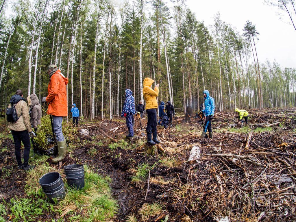 192ad2a4607 Sünnipäevalistel olid tordi ja lillede asemel kaasas kummikud, kindad ning  tahe panustada Eesti metsade liigirikkuse suurendamisse.